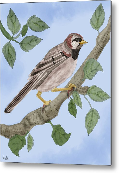Sparrow Metal Print featuring the painting Common House Sparrow by Anne Norskog