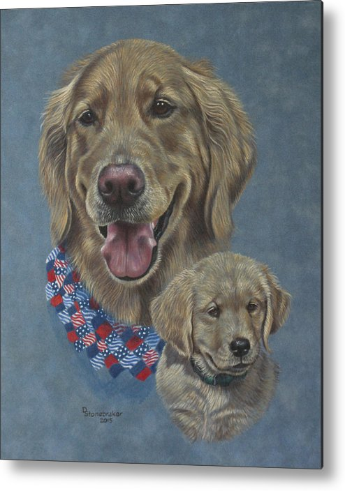 Golden Retrievers Metal Print featuring the drawing Della Then And Now by Debbie Stonebraker