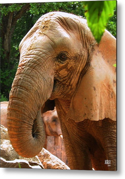 Elephant Metal Print featuring the photograph Elephant by Michele Caporaso