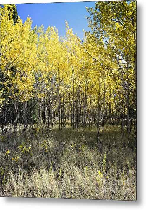 Landscape Metal Print featuring the photograph Fall Breeze On The Plains by Royce Howland