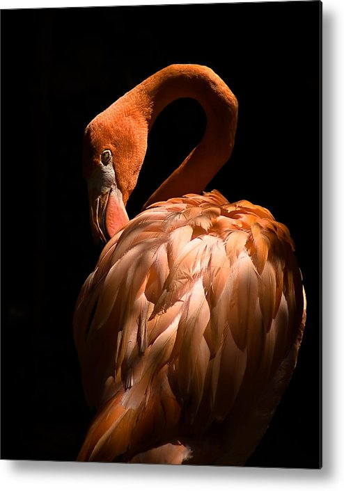 Flamingo Metal Print featuring the photograph Flamingo by Patrick Flynn