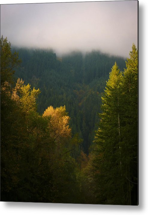 Tree Metal Print featuring the photograph Golden Light by Priya Ghose