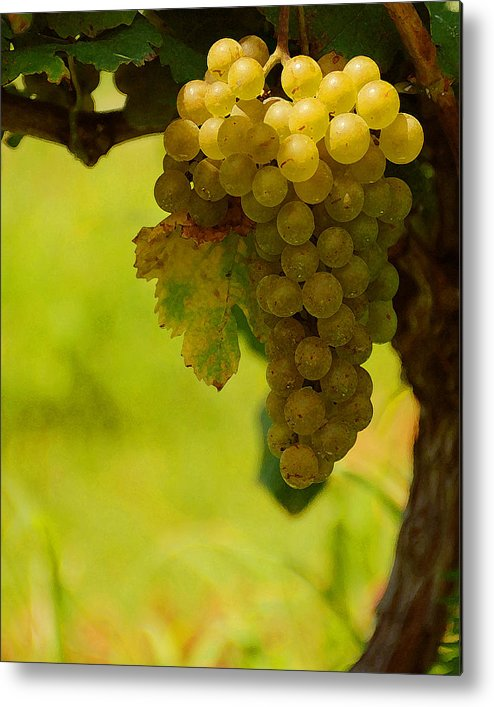 Grapes Metal Print featuring the photograph Grapes by Travis Aston