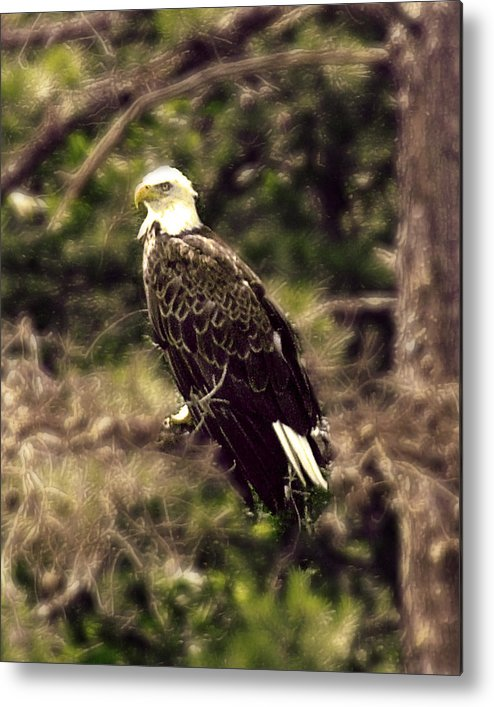 Eagle Metal Print featuring the photograph Guardian by Ken Gimmi