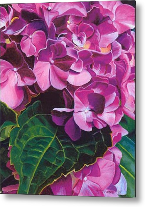Pink Hydrangea Painting Metal Print featuring the painting Hyrangea by Joyce Hutchinson