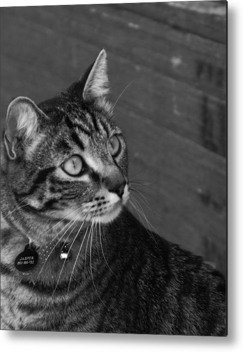 Animal Metal Print featuring the photograph Jasper by Jan Tribe