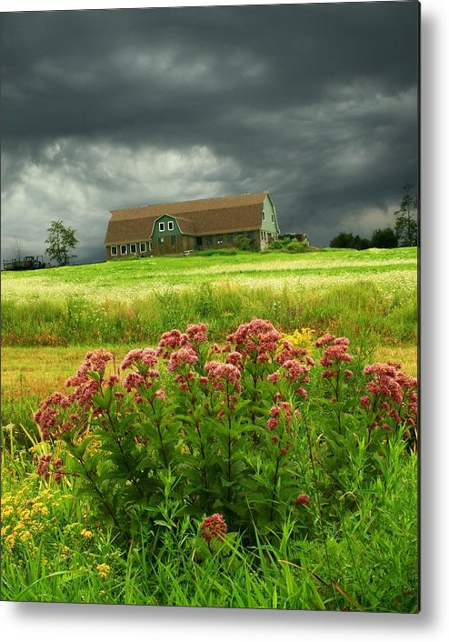 Wildflowers Metal Print featuring the photograph Joe Pye Weed And Barn by Roger Soule