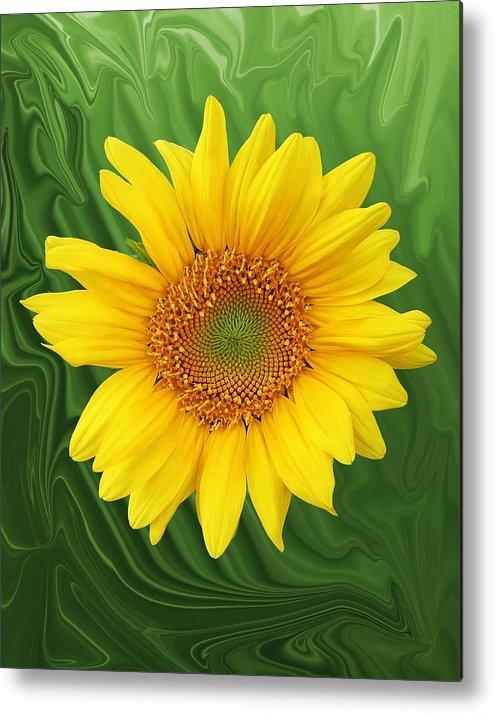 Sunflower Metal Print featuring the photograph Kansas Sunflower by Jim Darnall
