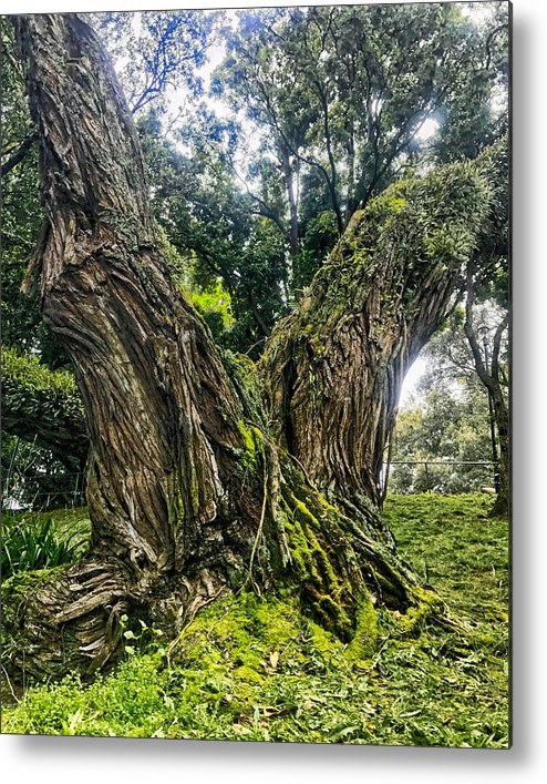 I Was In Auckland City And I Found This Old Tree In Albert Park. It Was Covered In Moss And Looked Majestic. Metal Print featuring the photograph Mossy Old Tree by Stuart Clifford