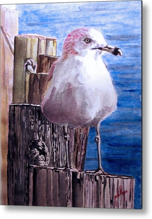 Seagull Metal Print featuring the painting My Gull by Jim Phillips