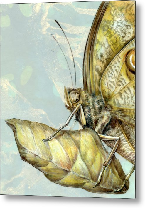 Moths Metal Print featuring the painting Owl Butterfly With Chrysalis by Mindy Lighthipe