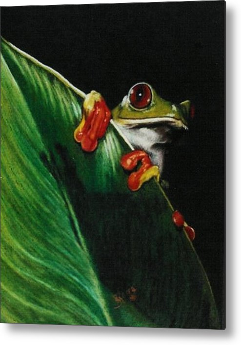 Frog Metal Print featuring the drawing Peek-a-boo by Barbara Keith
