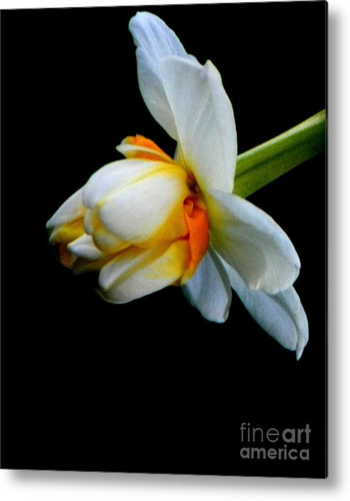 Flower Metal Print featuring the photograph Purity by Chase Whittaker