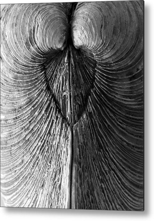 Seashell Metal Print featuring the photograph Quahog Closeup No.1 by Henry Krauzyk