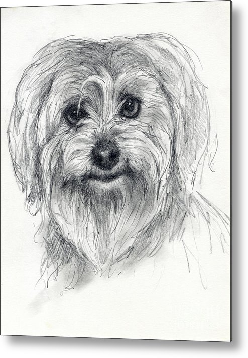 Dog Metal Print featuring the drawing Rosie by Tim Thorpe