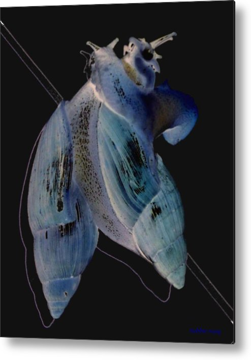 Snails Metal Print featuring the photograph Snail Hugs by Debbie May