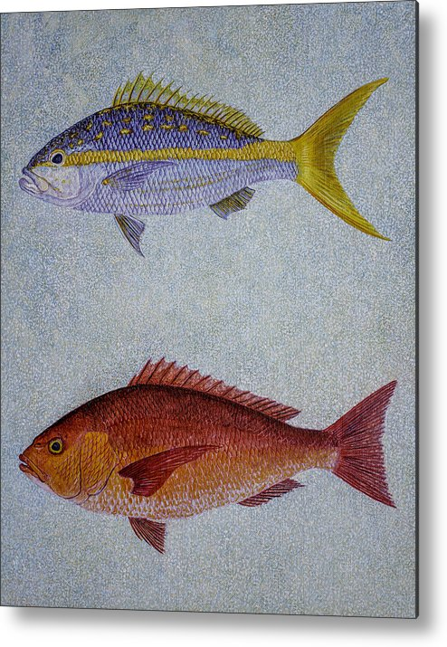 Yellow Tail Snappers Metal Print featuring the painting Snappers by Manuel Lopez