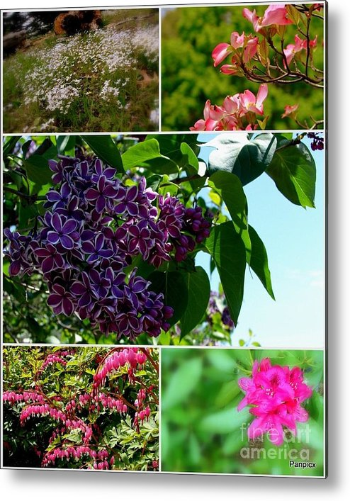 Lilacs Metal Print featuring the photograph Spring Glory by Priscilla Richardson