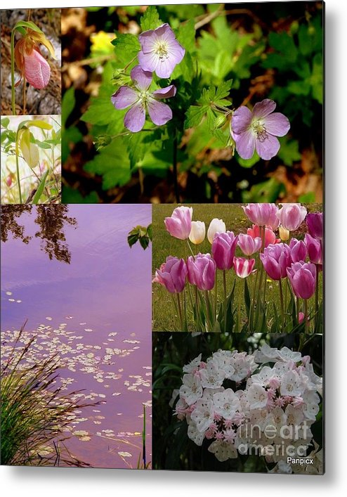 Wild Metal Print featuring the photograph Spring Has Sprung... by Priscilla Richardson