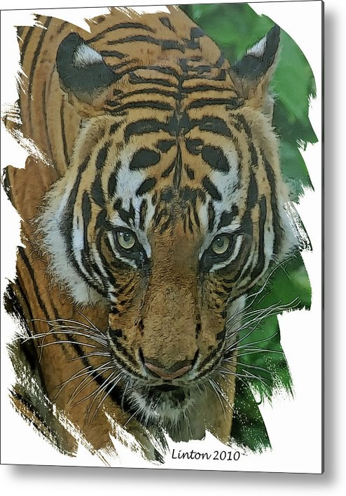 Sumatran Tiger Metal Print featuring the digital art Sumatran Tiger by Larry Linton