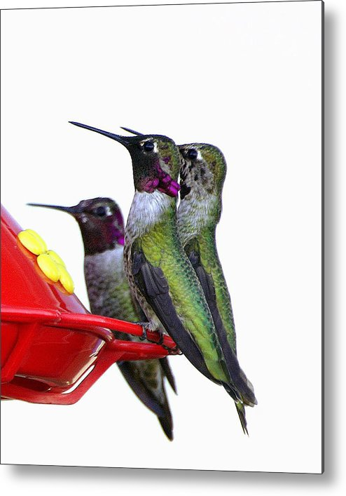 Birds Metal Print featuring the photograph The Breakfast Cub II by Lynn Andrews