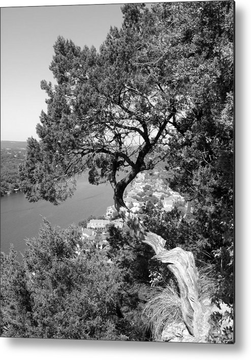 Mount Bonnell Metal Print featuring the photograph Tree On Mount Bonnell by Lindsey Orlando
