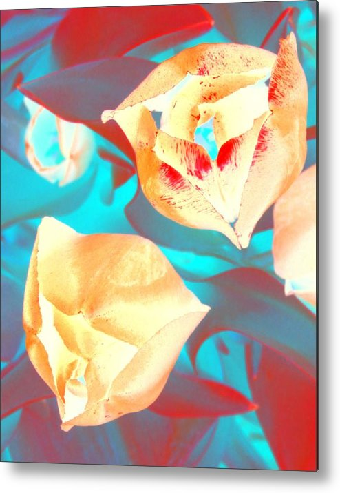 Tullips Metal Print featuring the photograph Tullip Glow by Tiffany Vest