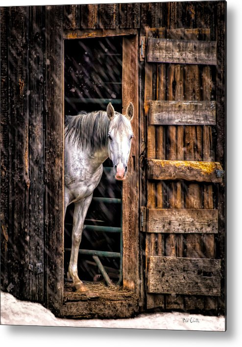 Horse Metal Print featuring the photograph Watching The Snow Fall by Bob Orsillo