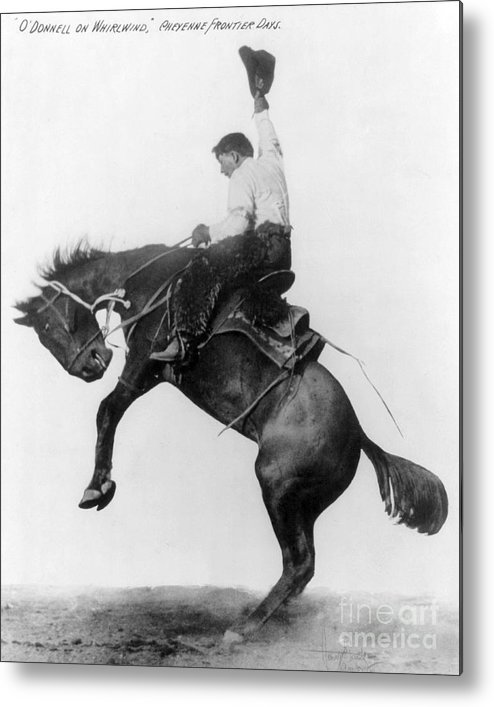 1911 Metal Print featuring the photograph Wyoming: Cowboy, C1911 by Granger