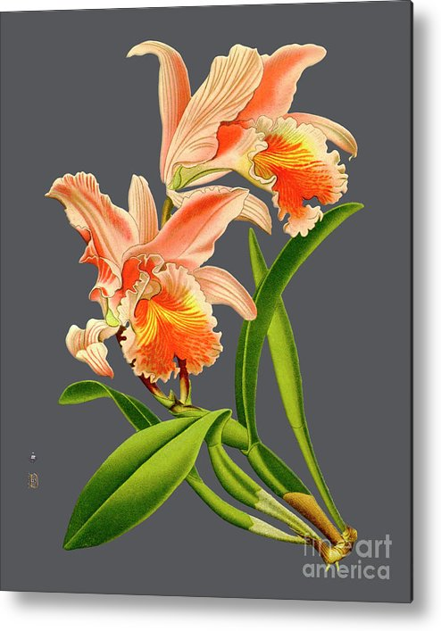 Vintage Metal Print featuring the digital art Orchid Old Print by Baptiste Posters