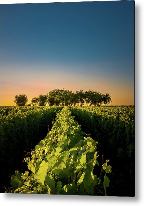 France Metal Print featuring the photograph Vouvray Vineyard by Joseph Smith
