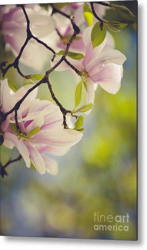 Magnolia Metal Print featuring the photograph Magnolia Flowers by Nailia Schwarz