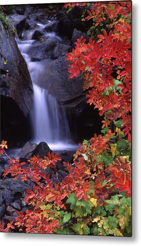 Rainier Metal Print featuring the photograph Paradise Valley Stream In Fall by Ken Dietz