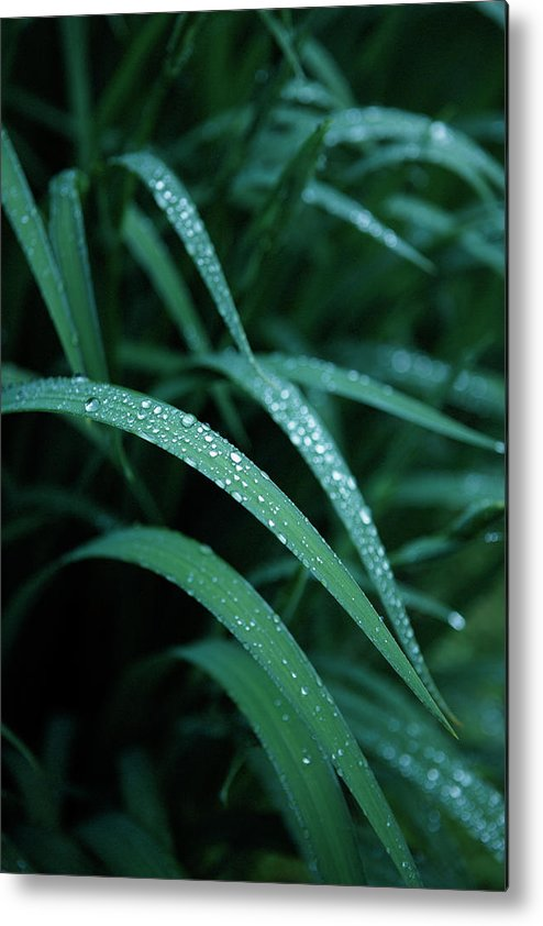 Tranquility Metal Print featuring the photograph Raindrop by Seiji Nakai