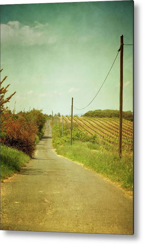 Tranquility Metal Print featuring the photograph Vineyard With Telephone Polled At Road by Paul Grand Image