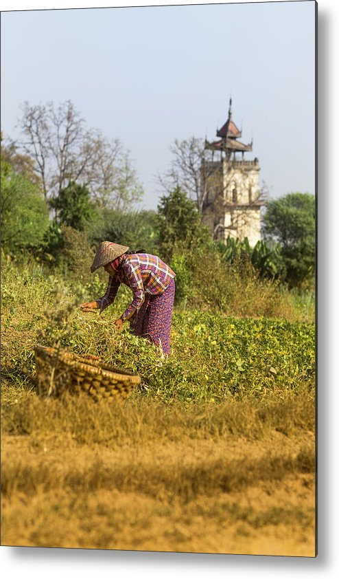 Three Quarter Length Metal Print featuring the photograph Woman Weeding At Nanmyin Tower by Merten Snijders