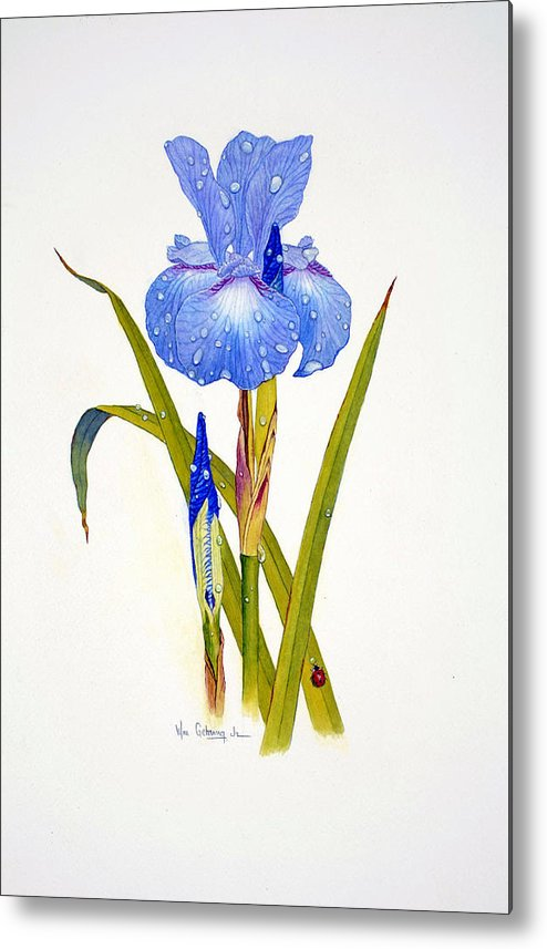 Flowers Metal Print featuring the painting Japanese Iris by Bill Gehring