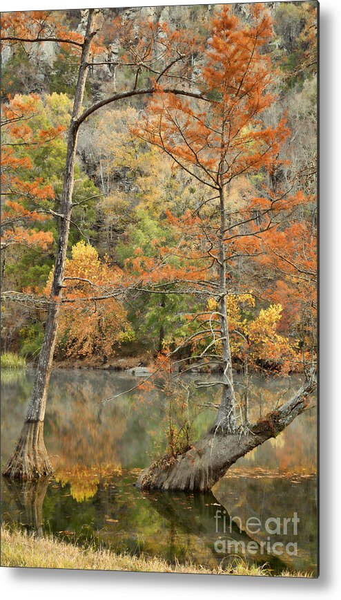 Landscape Metal Print featuring the photograph Cypress Trees in the Morning Light by Iris Greenwell