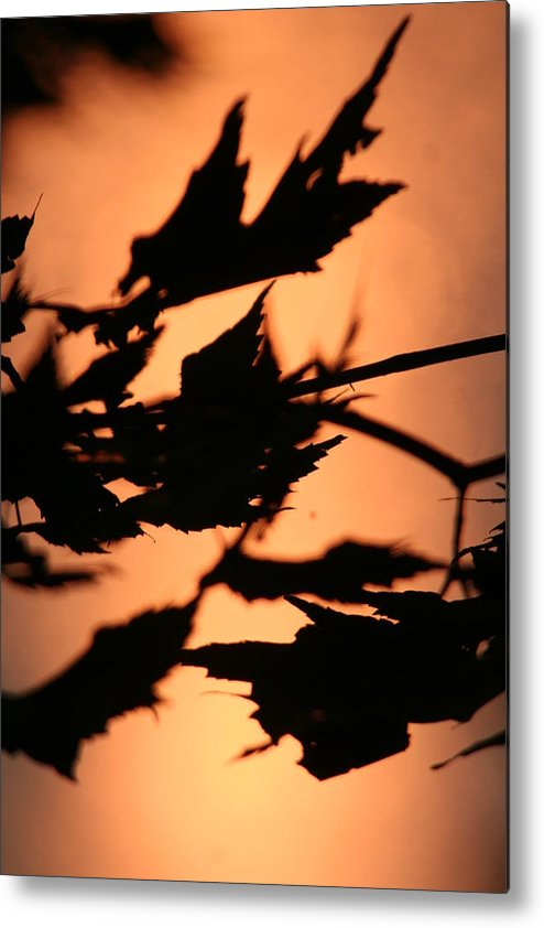 Sunset Metal Print featuring the photograph Leaves in Sunset by Dr Carolyn Reinhart