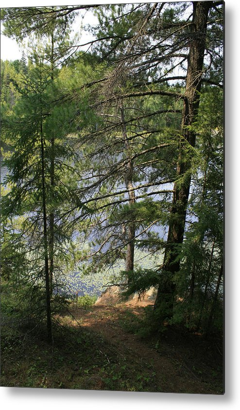 Photography Metal Print featuring the photograph A Place to Wander by Alan Rutherford