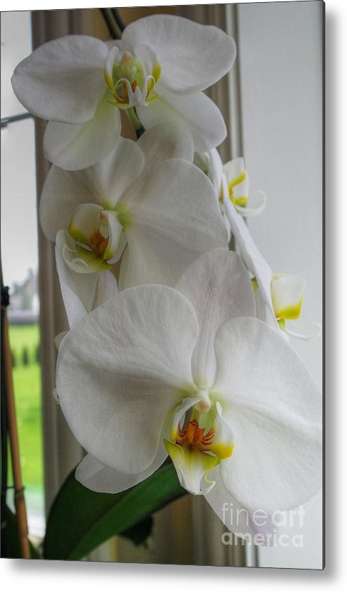 Orchid Metal Print featuring the photograph A White Orchid Day by David Bearden