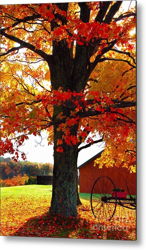 Berry Metal Print featuring the photograph Adirondack Color Show by Diane E Berry