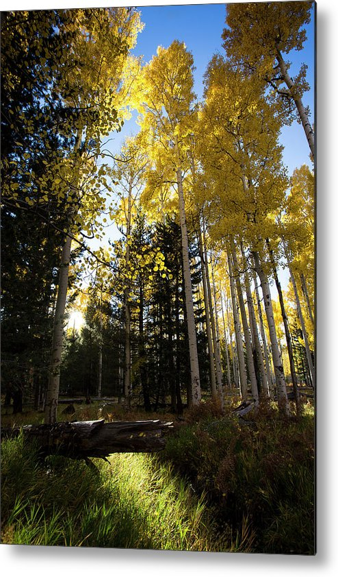 Arizona Metal Print featuring the photograph Autumn Peace by Cathy Franklin