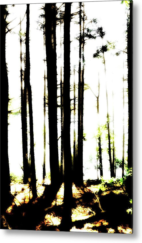 Bright Metal Print featuring the photograph Dawn in the woods by Corey O'Hara