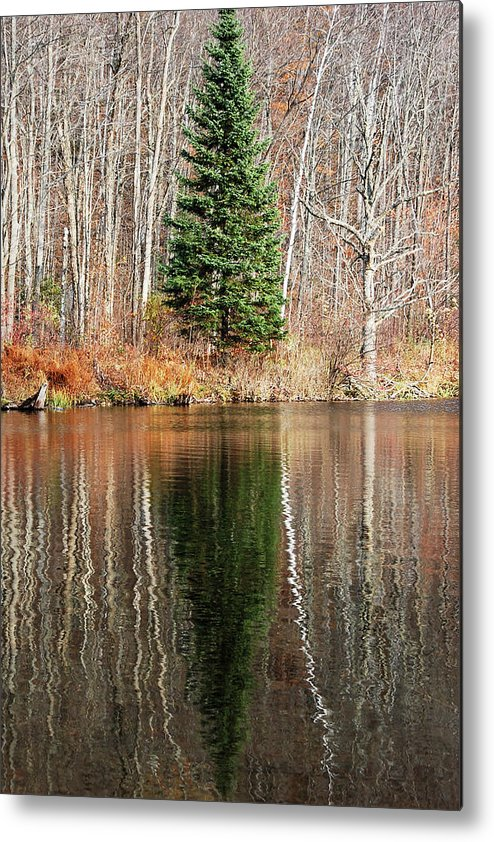 Darin Volpe Nature Metal Print featuring the photograph Evergreen - Buck Lake, Vermont by Darin Volpe