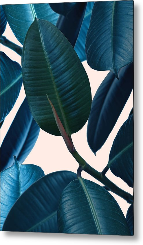Summer Metal Print featuring the photograph Ficus elastica 2 by Mark Ashkenazi