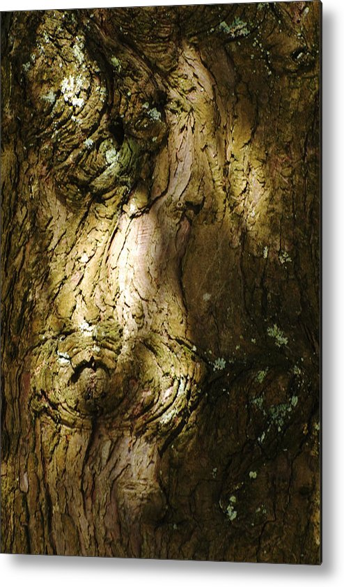 Tree Metal Print featuring the photograph Gnarly BC Tree by Richard Henne