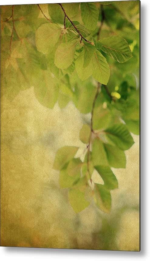 Leaves Metal Print featuring the photograph Golden by Rebecca Cozart
