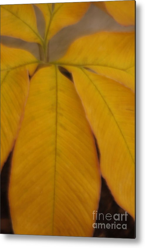 Leave Metal Print featuring the photograph Golden Umbrella by Katherine Morgan