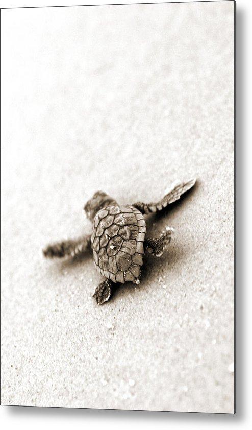 Loggerhead Turtle! Hilton Head Island Metal Print featuring the photograph Loggerhead by Michael Stothard